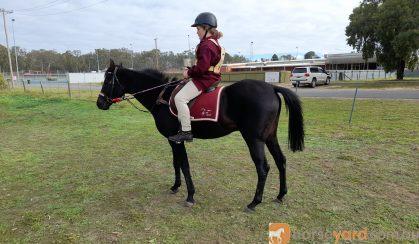 Henry on HorseYard.com.au