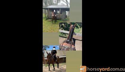 WANTED !!  on HorseYard.com.au