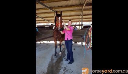 OTT Gelding suit jumping on HorseYard.com.au
