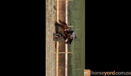 Jake - Dream child's pc mount on HorseYard.com.au