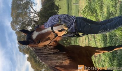Addi on HorseYard.com.au