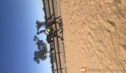Beautiful Bez  on HorseYard.com.au