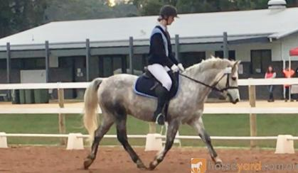 Super Pony Club/Interschools  Pony on HorseYard.com.au