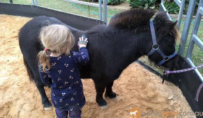 Beginners pony  on HorseYard.com.au