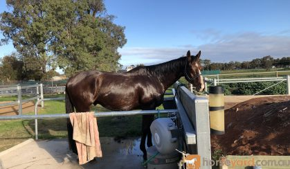 Great Allrounder  on HorseYard.com.au
