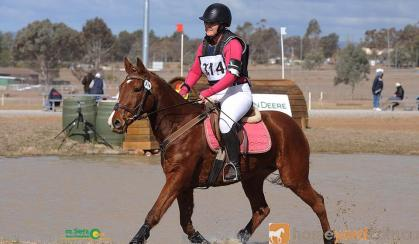For Sale Tango on HorseYard.com.au
