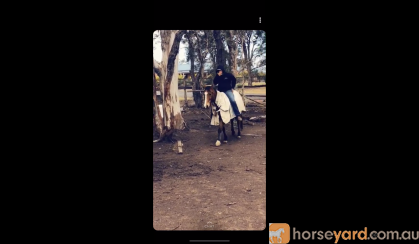 Quarter horse gelding  on HorseYard.com.au