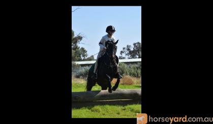 Sanlirra Dior on HorseYard.com.au