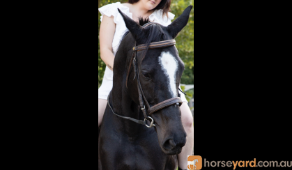 Ally  on HorseYard.com.au