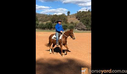 Hard Hat Henry Gelding on HorseYard.com.au