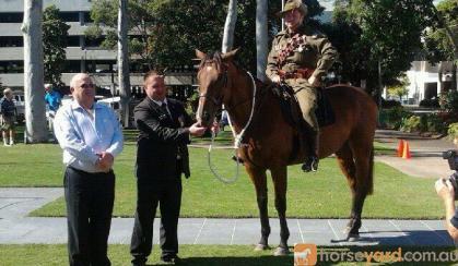 Very Quiet Tb Gelding  on HorseYard.com.au