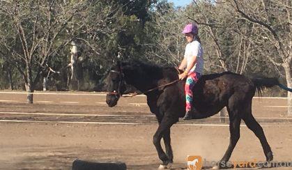 Quiet mare on HorseYard.com.au