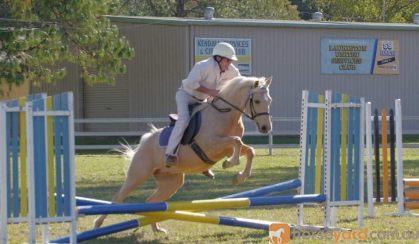 For Sale!  on HorseYard.com.au