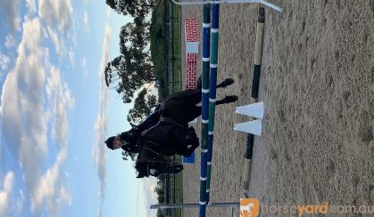 Showjumping school mistress - BERRIVALE sky blue on HorseYard.com.au