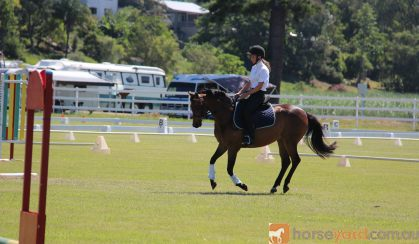 Belrose Park Sonnets Charm on HorseYard.com.au