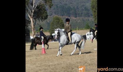 Ultimate Performance Pony on HorseYard.com.au