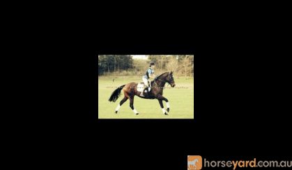 Eventing or Jumping on HorseYard.com.au