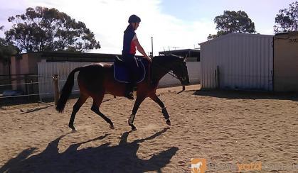 Standardbred Mare on HorseYard.com.au