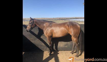 Beautiful OTT on HorseYard.com.au