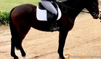 Eventing Potential Plus  on HorseYard.com.au