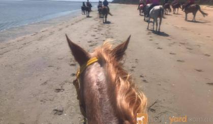 Trail Riding Appaloosa on HorseYard.com.au