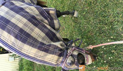 Caribu Woolen Rug on HorseYard.com.au