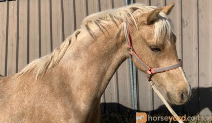 Mr Personality on HorseYard.com.au