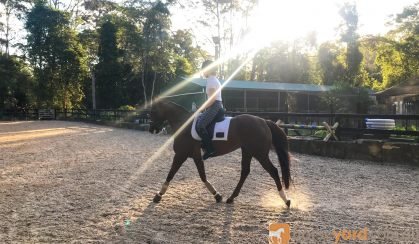 Lovely, quiet attractive workhorse for sale on HorseYard.com.au