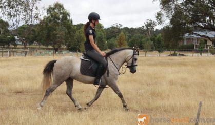 Tommy on HorseYard.com.au