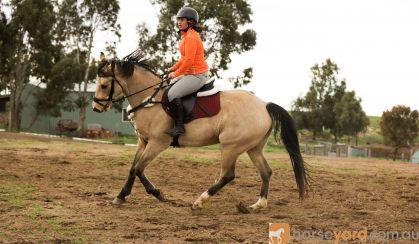 Next jumping mount  on HorseYard.com.au