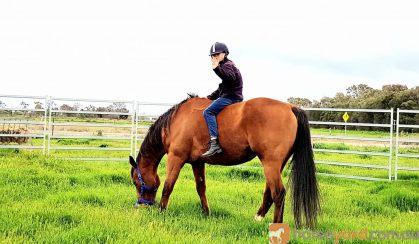 16hh TB mate  on HorseYard.com.au