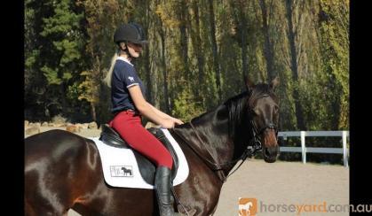 Ally WB x TB on HorseYard.com.au