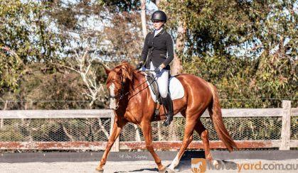 Bondi on HorseYard.com.au