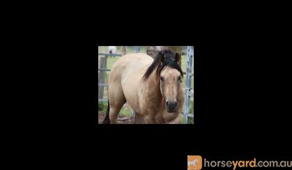 Pally Colt - QH  on HorseYard.com.au