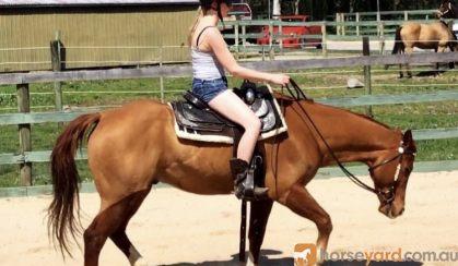 Beautiful gelding on HorseYard.com.au