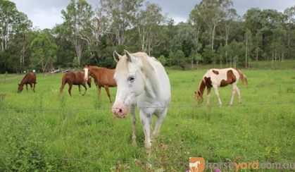 All rounder SOLD on HorseYard.com.au