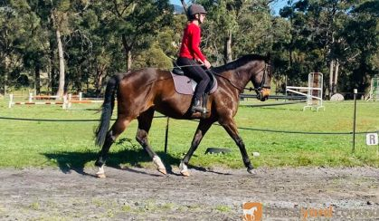 Gorgeous boy with all the hard work done!  on HorseYard.com.au
