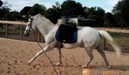 Talented Allrounder  on HorseYard.com.au