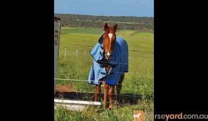 Blank canvas on HorseYard.com.au