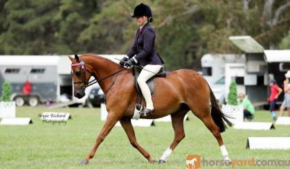 Show/Allrounder childs pony  on HorseYard.com.au