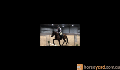 """Perfect peridot "" on HorseYard.com.au"