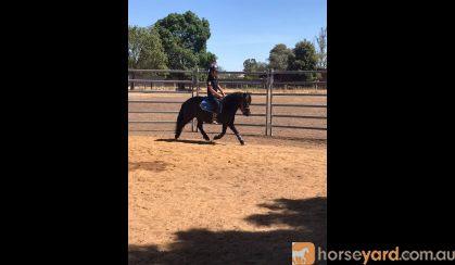Glen-J San Remo on HorseYard.com.au