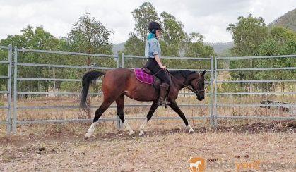 90% Reg Partbred Arab Mare on HorseYard.com.au