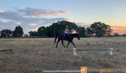 Eventer/All rounder on HorseYard.com.au