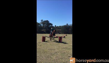 Something Major on HorseYard.com.au