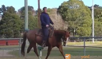 Josh  on HorseYard.com.au