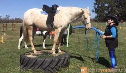 Appy 8 years old 15.1hh on HorseYard.com.au