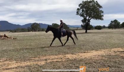Eventing prospect on HorseYard.com.au