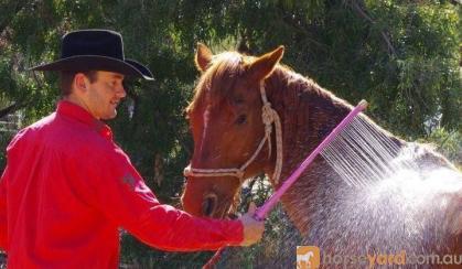 Washa on HorseYard.com.au