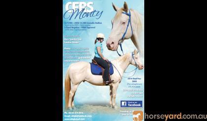 CFRS Monty on HorseYard.com.au